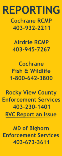 We are providing phone contact information for the Cochrane RCMP, Airdrie RCMP, Cochrane Fish and Wildlife, and Enforcement Services in Rocky View County and the MD of Bighorn.
